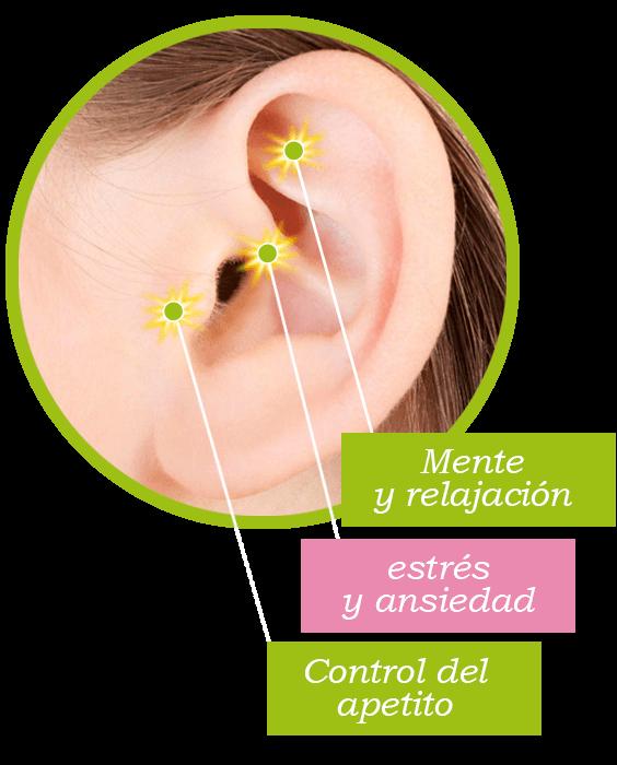 auriculoterapia_adelgazar_y_punto